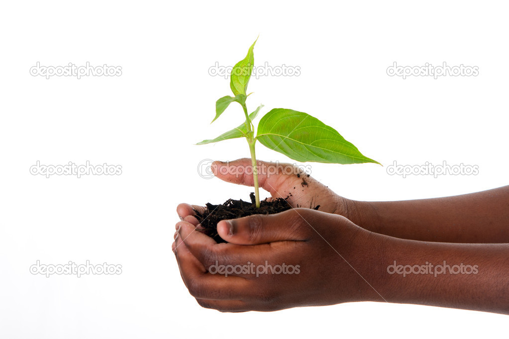 A young new plant growing from palm in hands of African child, isolated. Drought on Earth concept. — Stock Photo #5892702