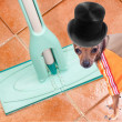 Dog on clean floor — Stock Photo