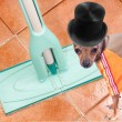 Stock Photo: Dog on clean floor