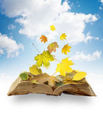 Leaves on book — Stock Photo