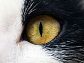 Eyed cat — Stock Photo