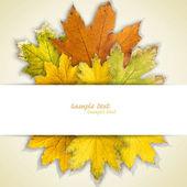 Quadro de folhas de outono — Foto Stock