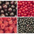 Berry set. — Stock Photo