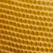 Honeycomb with bees — Stock Photo #5752682