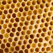 Honeycomb with bees — Stockfoto
