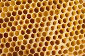Panal con abejas — Foto de Stock