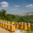 Yellow beehives in line - Stock Photo
