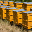 图库照片: Yellow beehives in line