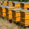 Yellow beehives in line — Stockfoto #5888907