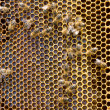 Honeycomb with bees and honey — Stock Photo