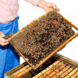 Beekeeper with honeycomb - Stock Photo