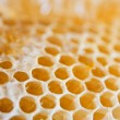 Honeycombs cells — Stock Photo