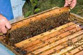 Imker met honingraat — Stockfoto