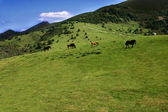 Grassland in Asturias with horse — Stock Photo
