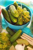 Pepinos frescos para preparar pickles — Foto de Stock