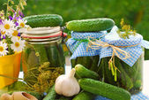Jars of pickled cucumbers in the garden — Stock Photo