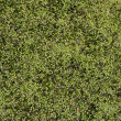 Bright green duckweed — Stock Photo