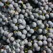Close-ups of fresh grapes — Stock Photo