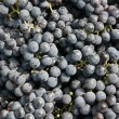 Close-ups of fresh grapes - Stock Photo