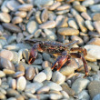 Yellow Crab — Stock Photo #5626210