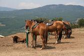 Photo of horses in a farm — Stock Photo