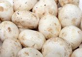 Mushrooms background — Stock Photo