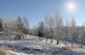 Winter Forest (panorama) — 图库照片