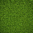 Grass Background — Stock Photo #6037754