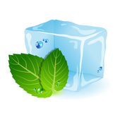 Mint with ice — Stock Vector