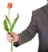 Man in suit and tie holding tulip flower isolated on white — Stock Photo