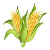 Ears of corn — Stock Vector