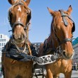 Horses in Berlin — Stock Photo