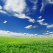 Meadow covered by a grass — Stockfoto