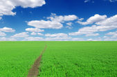 Pathway on field — Stock Photo