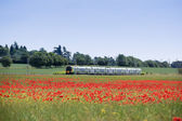 Commuter train hertfordshire poppy field — Stock Photo