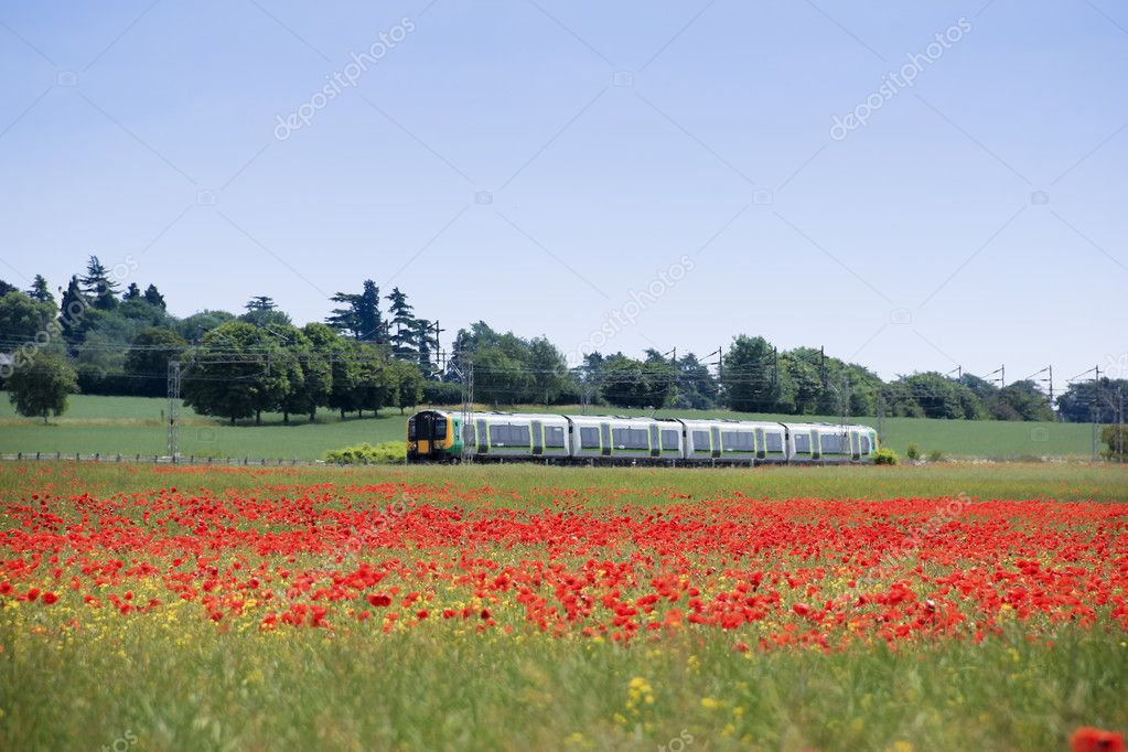 Commuter train from london passing through hertfordshire countryside near tring with fields full of bright red poppies — Stock Photo #5998394