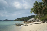 Palm tree beach koh samui thailand — Stock Photo