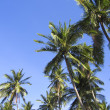 Stock Photo: Green palm trees overhead tropical beach