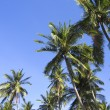 Green palm trees overhead tropical beach - Stock Photo