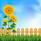 Background with sunflowers. Mesh. — Stock Vector