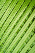 Reed palm leaves — Stock Photo