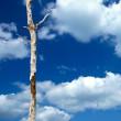 Dead tree — Stock Photo #5439389