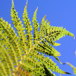 Fern closeup — Photo
