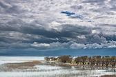 Los árboles y las nubes. — Foto de Stock
