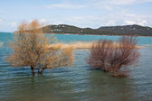 Lake landschap met bomen. — Stockfoto
