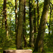 Wood Bench In the Forest — Stock Photo