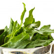 Sorrel — Stock Photo