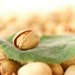 Pistachios — Stock Photo #5661359