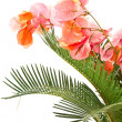 Sago palm and Bougainvillea — Stock Photo #5851628
