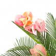 Sago palm and Bougainvillea — Stock Photo #5851717